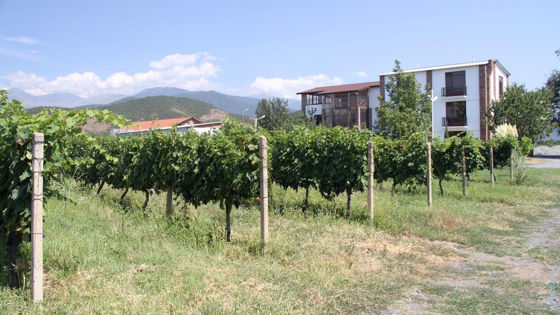 гостиница в винограднике Киндзмараули